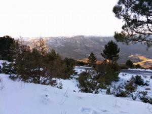 Monte Ardal